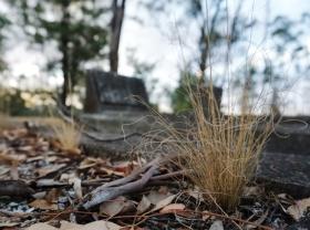 grass_grave3
