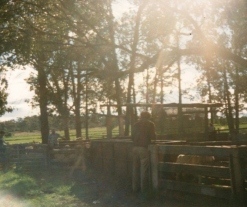 ch_sheepyards